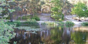 Seekenmoor 09.06.15