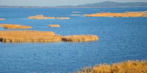 Jezioro Gardno - Pływające trzcinowiska