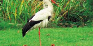 rezerwat_ornitologiczny_jezioro_modla