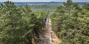 Pine forest in Slowinski National Park, located on the Baltic Sea coast, Poland - view from Czolpino Lighthouse